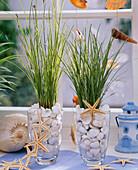 Carex (Seggen) in mit Muscheln gefüllten Gläsern und mit Seestern - Kette
