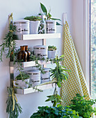 Wall shelf with herbal tins and bouquets, cups with cress