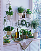 Kitchen with herbs on wall shelf, in a hanging basket and on a sideboard