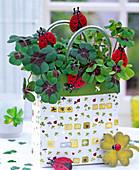 Oxalis deppei with ladybug plugs in gift bag
