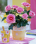 Rose with cake lace sleeve on the table, mug cup