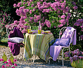 White metal garden furniture in front of blooming syringa (lilac)