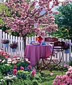 Metal seating group in front of blooming malus (ornamental apple)