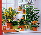 Theme window in orange