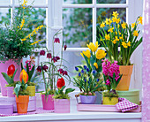 Spring flowers at the window