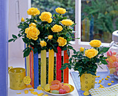 Rose in colorful woodchip box at the window, cup with sweets