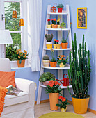 Room situation with cactuses