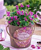 Viola odorata 'Pink' (Violet)