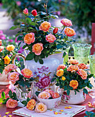 Rose (pot roses), salmon orange, in different porcelain containers