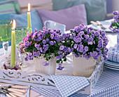Campanula table decoration