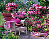 Rhododendron 'Scintillation' and yakushimanum 'Dawn red'