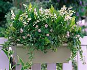 Fragrance box with Convallaria majalis, Tiarella