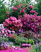 Rhododendron (alpine rose, Japanese azalea)