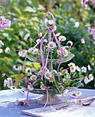 Bellis perennis (daisies) in glass etagere on table