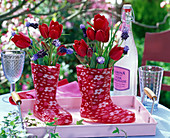 Tulipa, muscari in red rubber boots
