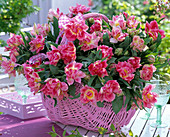 Bouquet with tulipa (tulip), in pink basket, tray, glasses