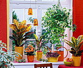 Theme window, theme colorful foliage plants