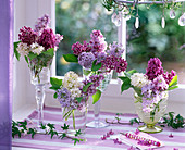 Syringa in white, light purple and dark purple at the window, Hedera tendrils