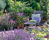 Recliner between Lavandula (lavender) and citrus plants