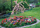 Plant a round bed with perennials and hanging cherry