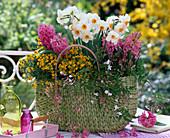 Wicker basket with Narcissus, Hyacinthus, Erysimum