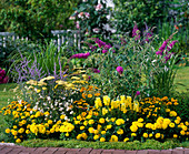 Yellow bed of Tagetes (marigold), Dahlia (dahlia)