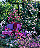 Garden bench in front of rose arbor