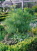 Herb bed with Buxus (Box)
