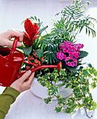 Planting a bowl