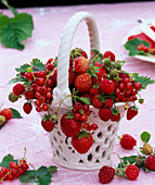 Fragaria (strawberry), Ribes (currant), Rubus (raspberry)