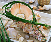 Large seashell with candle and grass wreath in bowl with sand