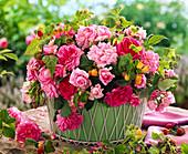 Rose 'Ispahan', light pink, 'Mme Isaac Pereire', dark rose, 'Président de Sèze'