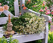 Chamomilla recutita syn. Matricaria recutita (Real chamomile)