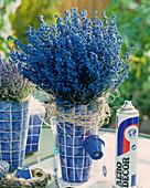 Blue sprayed Erica gracilis (heather), spray bottle