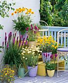 Perennial balcony, Anthemis tinctoria 'Kelway', 'Hollandaise sauce'
