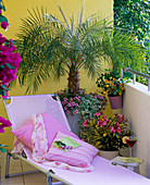Phoenix roebelenii (date palm) planted with Calibrachoa
