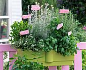 Herb box with Ocimum (basil), Rosmarinus (rosemary)