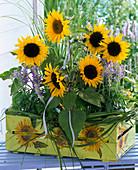 Helianthus 'Mezzulah', 'Pacino Gold' (sunflower), Salvia