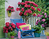 Shadow balcony with hydrangea