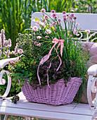 Basket with Herb Allium, Thymus, Satureja