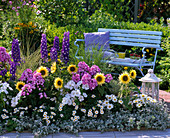 Colorful bed of perennials and summer flowers delphinium