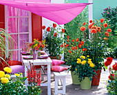 Dahlia terrace with awning