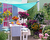 Container plant terrace with awning