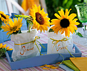 Helianthus annuus on lanterns in paper bags