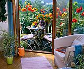 Mini-balcony with dahlia, tagetes (Marigold)