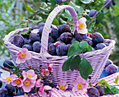 Basket with Prunus' House Plum, Anemone