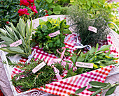 Small bouquets on herbs with signs Salvia, Origanum