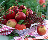 Malus (apple), sambucus (elderberry) on tray, kitchen towel