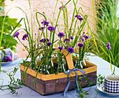 Small bouquets of Centaurea (cornflower), Agrostis (bent)