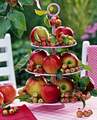 Pink shelves with Malus (apples and ornamental apple)